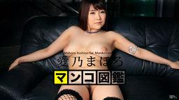 MANKO Zukan YOSHINO Mahoro :: Mahoro Yoshino